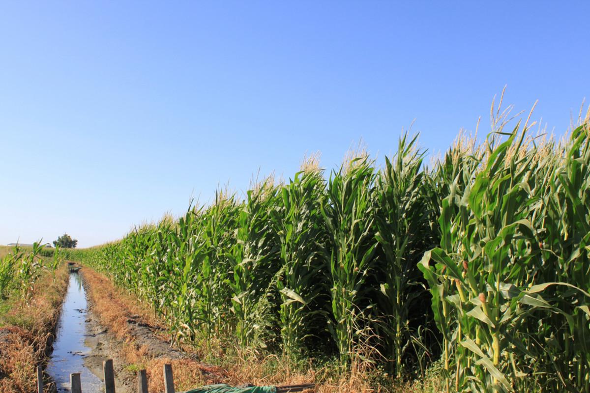 chlorpyrifos pesticide lawsuit